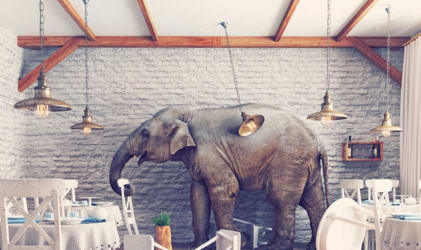 The elephant  in a restaurant